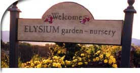 Welcome to Elysium garden nursery