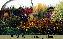 Perennials at Elysium gardens